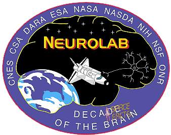 Patch Neurolab